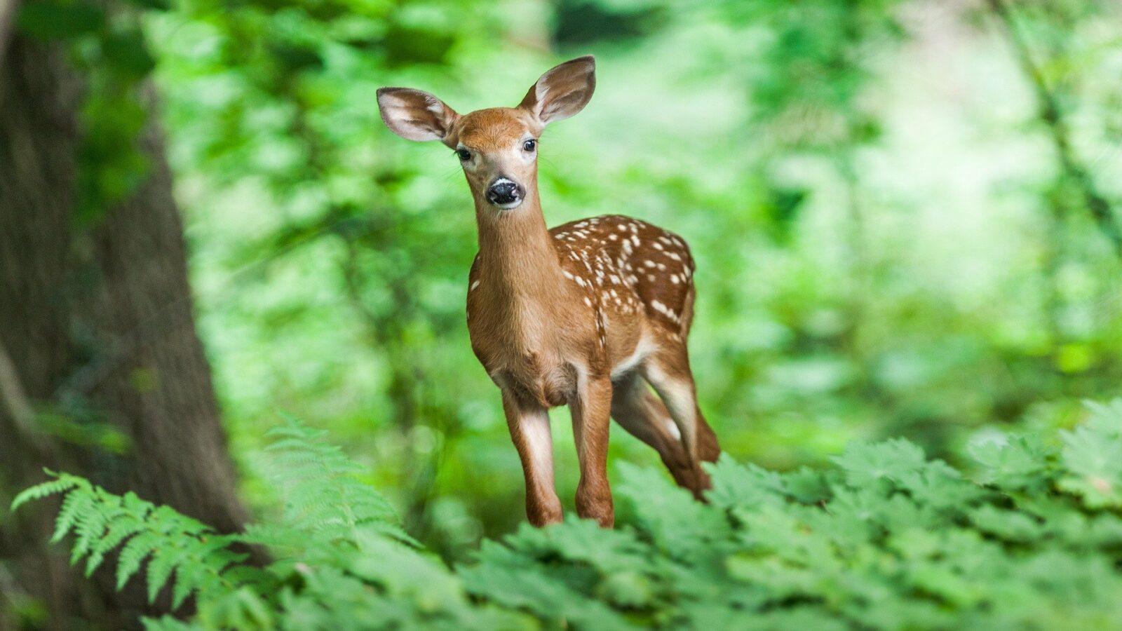 Waldkindergarten Dinkelscherben